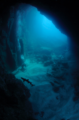 Underseahunter Group - cave and white tip shark in Cocos Island