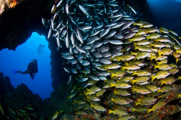 School of fish, ©Underseahunter Group