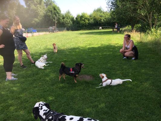 Die Hunde fühlen sich wohl, nicht nur in Rennspielen.