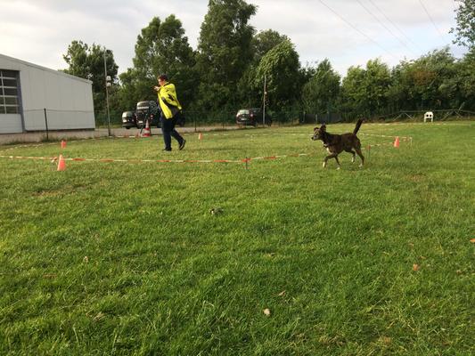 Longieren in der Hundeschule Familien-Tiere in Oldenburg