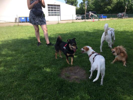 Zwei Kleine Hunde in der Spielstunde für alle Rassen und Größen