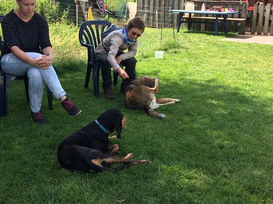 Entspannte Hunde lassen auch ihre Besitzer entspannen.