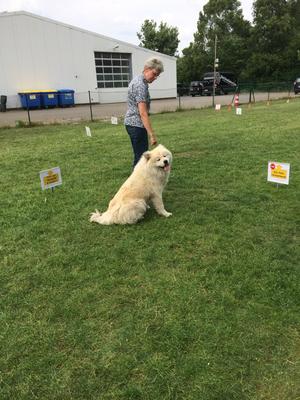 Ralley Obedience trainiert spielerisch den Grundgehorsam