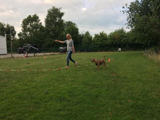 Longiertraining in der Hundeschule Familien-Tiere in Oldenburg
