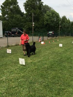 Rally Obedience ist eine der Sportarten in diesem Kurs