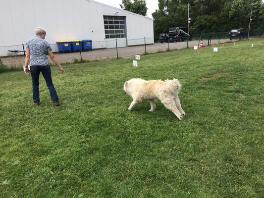 Rally Obedience ist eine schöne entspannte Hundesportart