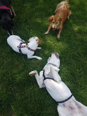 Spielstunden bieten Zeit für Hundefreundschaften.