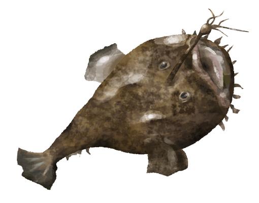 魚 イラスト アンコウ