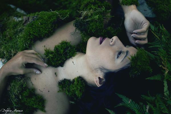 Le coeur de la forêt / The heart of the forest