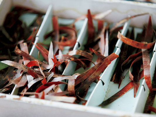 *Slivers of thinly-planed mountain cherry bark to be used as fasteners for the cedar slices.