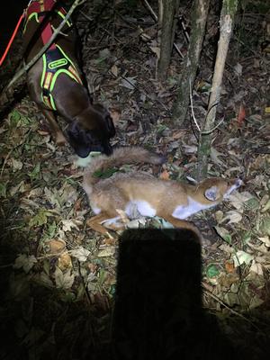 Todsuche auf Fuchs