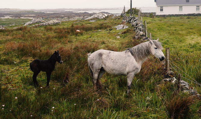 Hillside Lodge - Clifden, Connemara, Galway County, Ireland - Pony