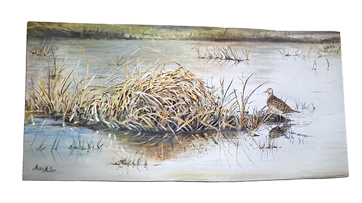 MatsMüller, Tuvsnäppa, Pectoral Sandpiper, 59x29cm