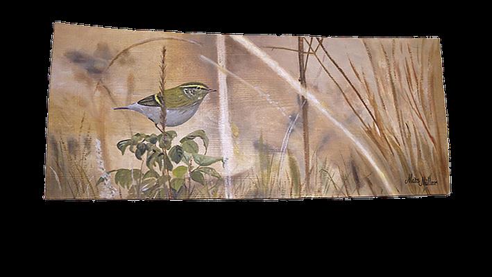 MatsMüller, Taigasångare, Yellow-browed Warbler, 45x20cm