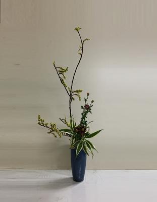<キブシ 小菊 ドラセナ・サンデリアーナ> Kumikoさんの作品です。