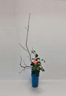 2019.3.7 <黒文字(クロモジ) 椿> 枝ぶりの良くない椿でしたが、花が愛らしくて二種で仕上げてみました。Atsukoさんの作品です。