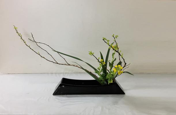 2019.2.20 <金葉こでまり 菜の花 キキョウラン> Akikoさんの作品です。