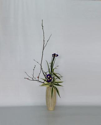2019.2.19 <木瓜(ボケ) ダッチアイリス ドラセナ・サンデリアーナ> Atsukoさんの作品です。