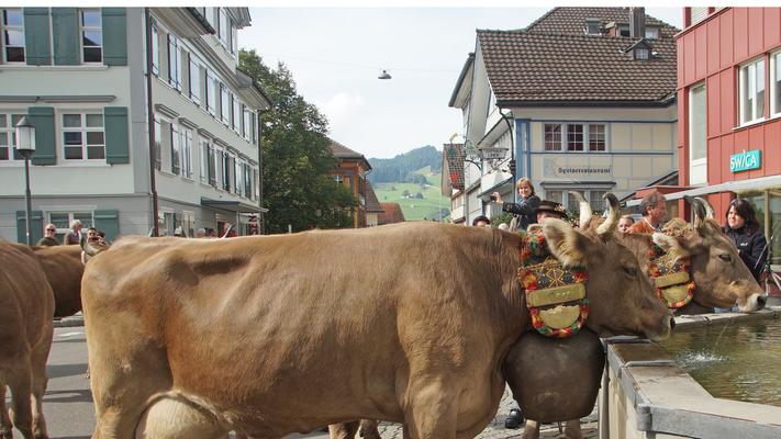 Almabtrieb-in-der-Schweiz-erleben-Tourismus
