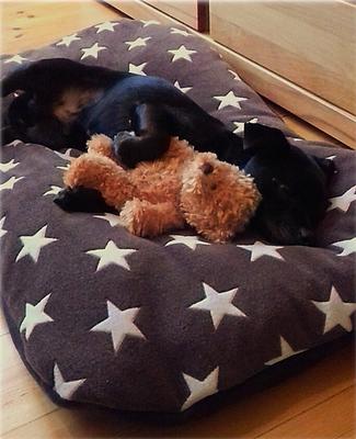 Hundekissen mit glücklichem Besitzer
