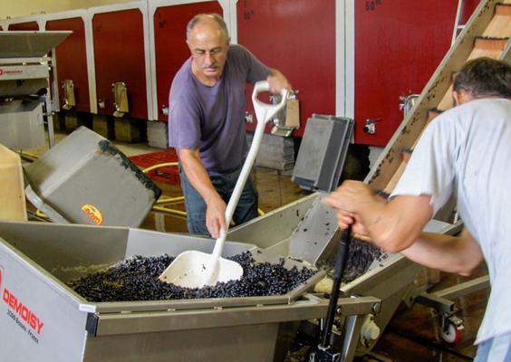 De druivenoogst van Domaine Nicolas komt binnen op het domein
