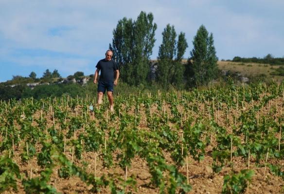 De wijngaarden van Domaine Nicolas