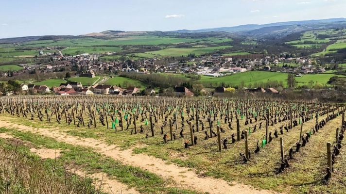 Vanuit de wijngaard kijk je op het dorp Nolay