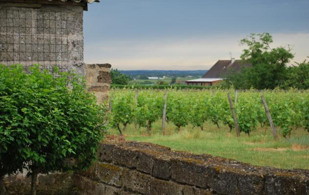 De wijngaarden van Domaine des Bleuces