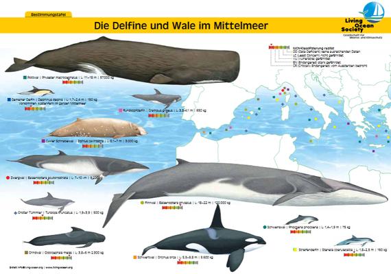 Wale und Delfine im Mittelmeer