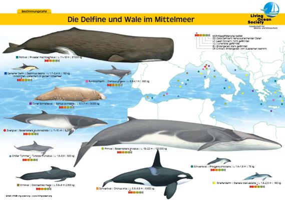 Skipper's Guide Wale und Delfine