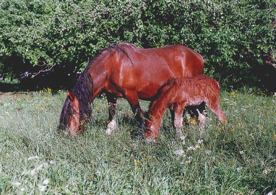 Anette im Jahr 2000 mit Fohlen Amelie