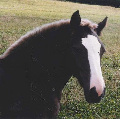 Anna-Lena als Fohlen 1998