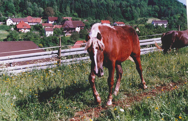 Revanna wurde nach Bayern verkauft