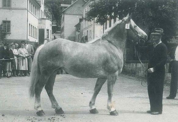 Johann Blattert 1956 an der staatlichen Bezirksschau beim Bonndorfer Schloss mit der Siegerstute Trudi (*1949) von Deutosohn
