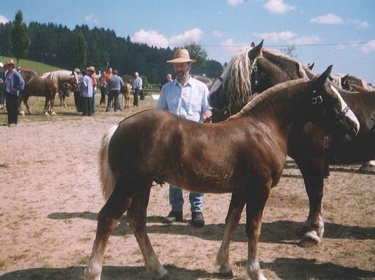 Ramiro von Riegel an der Fohlenschau in St. Märgen