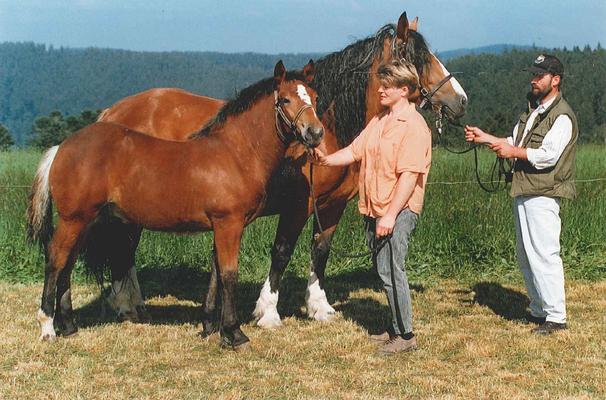 Remo von Riegel als Fohlen 1995