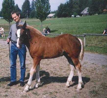 Rasmus (heute Rico) lebt im Nordschwarzwald