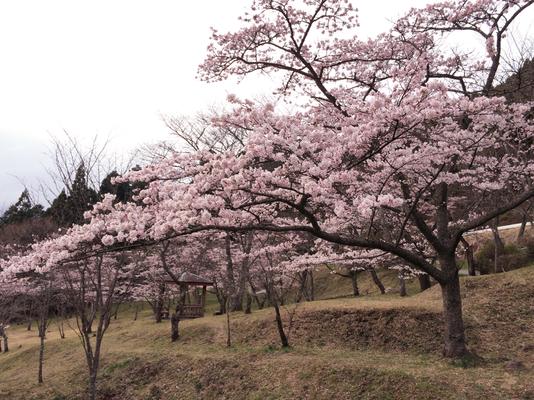 千本桜スタート地点