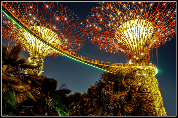 Super Tree at Gardens by the Bay, Singapore