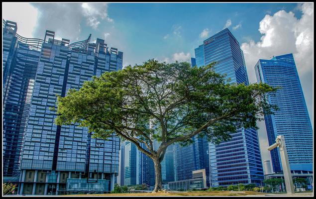 Last tree, Singapore