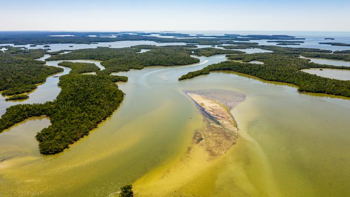 Die Everglades Florida USA