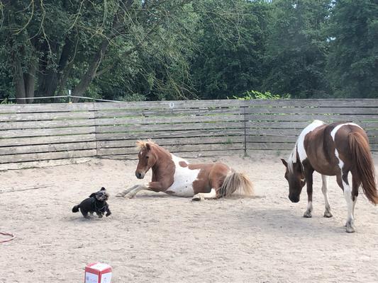Das neue Ponybande-Team: Matti, Franz und Randl