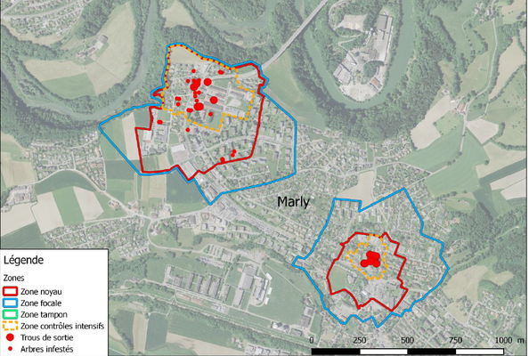 Asiatischer Laubholzbockkäfer Monitoring Spürhunde
