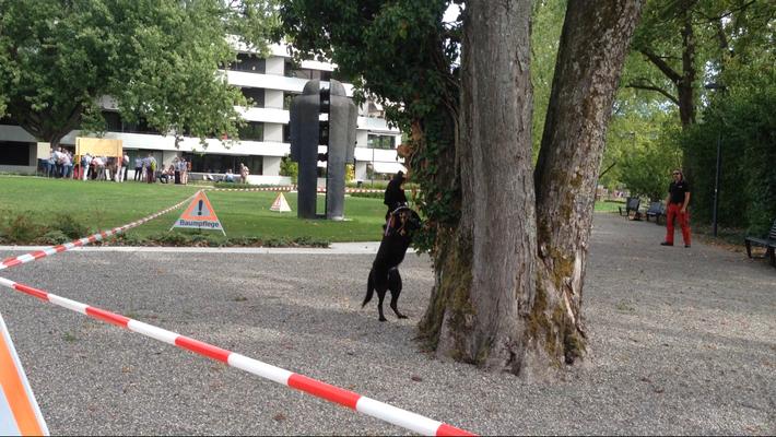 ALB Spürhund Maisha bei der Suche (Foto: Norma Kleiber)