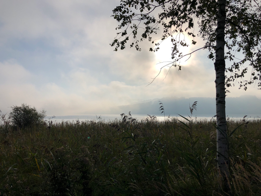 Wieder der Mattsee aber früh am Morgen