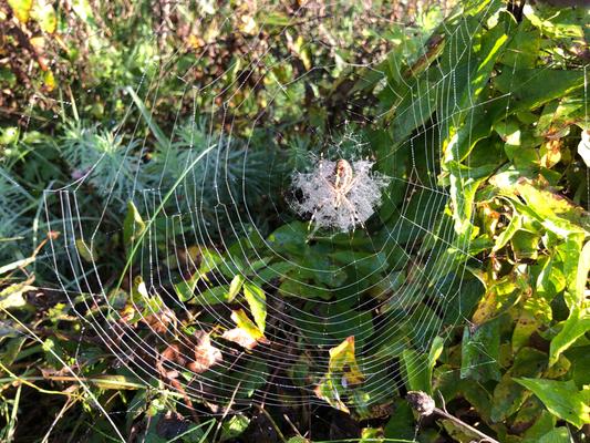 in der Nähe des Unteren Egelsees, vor dem Tiefsteinbach, hat es wohl hunderte perlenbesetzte Spinnennetze