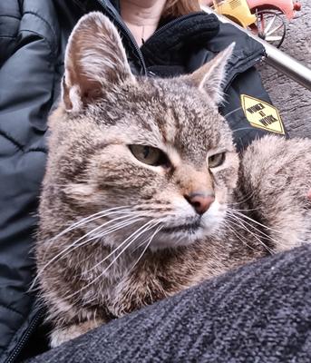 Krümel (15 Jahre)