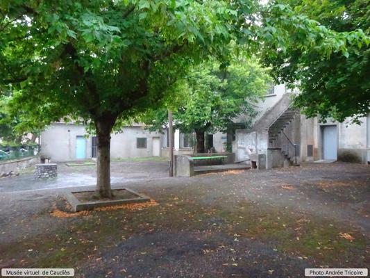 arbre déjà présent en 1957