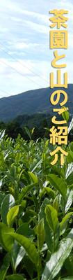 茶園と山のご紹介