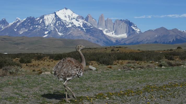 Auch Emus hatte es einige. Den Puma konnten wir leider nicht fotografieren.